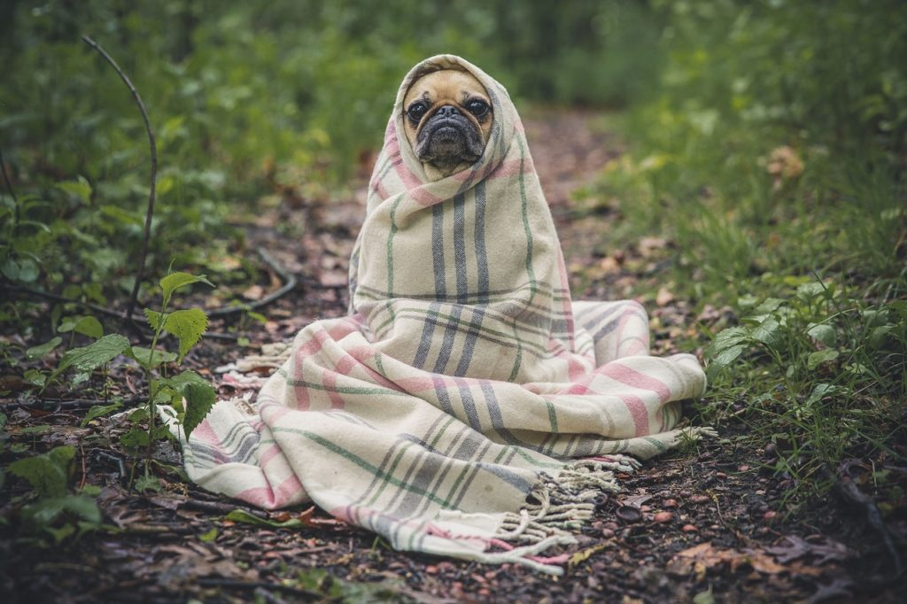 犬 カサカサ ワセリン